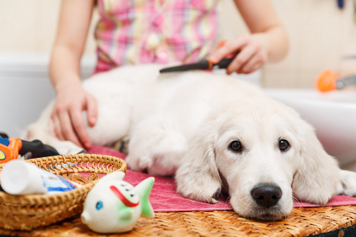 mobile pet grooming fort lauderdale