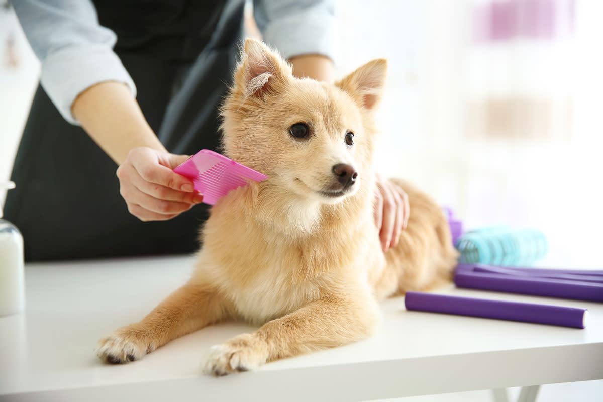 mobile pet grooming near me